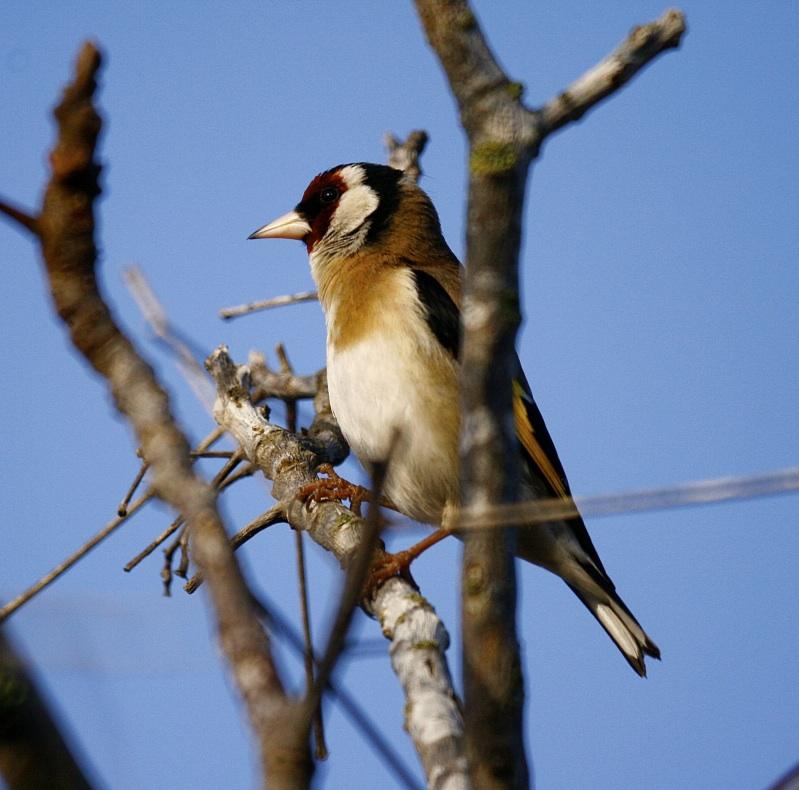 Curso de ANSE sobre dos voluntariados de birdwatching
