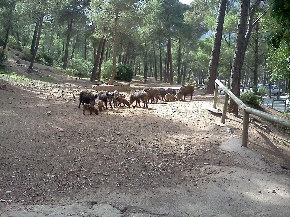 Fauna que puede verse en Sierra Espuña