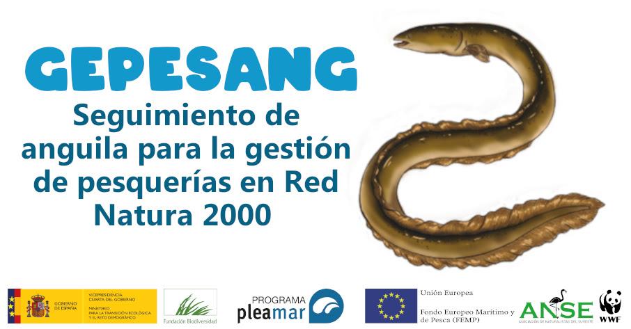 Seguimiento de anguila para la gestión de pesquerías en Red Natura 2000, con ANSE