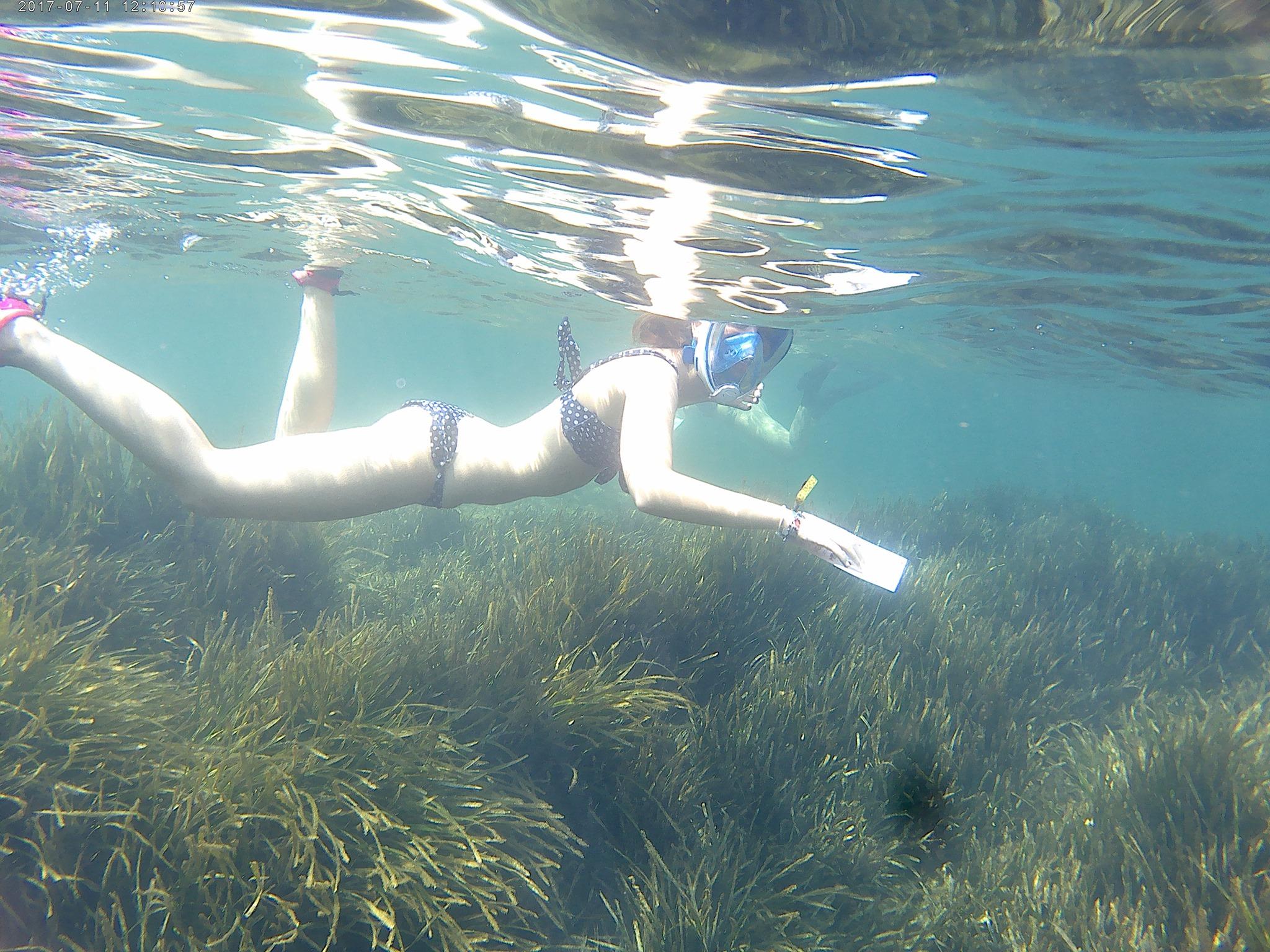 Snorkel y buceo Centinelas de la Reserva Marina de Cabo Tiñoso, con la UMU