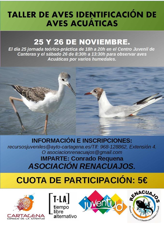 Taller de identificación de aves acuáticas, con la Asociación Renacuajos