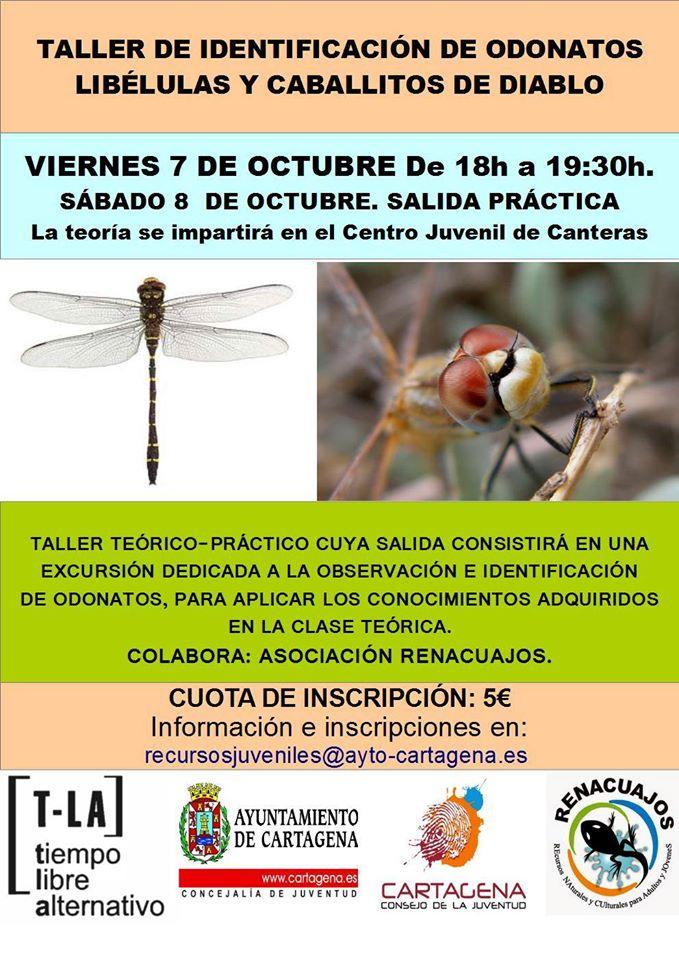 Taller de libélulas y caballitos del diablo, con el Ayto. de Cartagena.