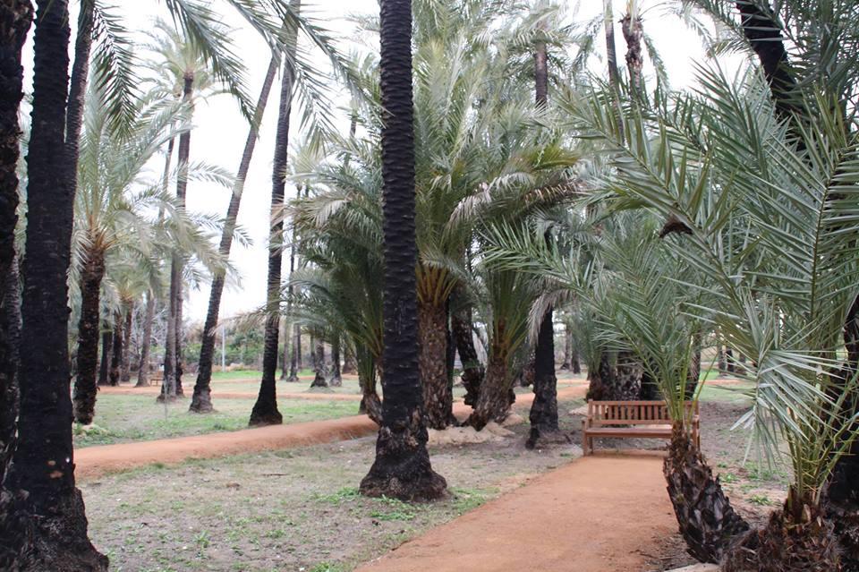 Tesoros vegetales de los jardines de Murcia, con Turismo Botánico