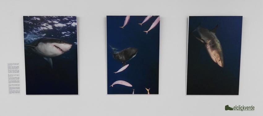 Expo 'La reserva del gran tiburón blanco', de Juan Angel Cano.