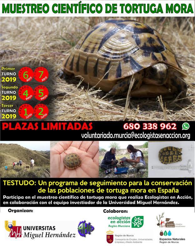 Muestreo de tortuga mora, con EEA REgión Murciana
