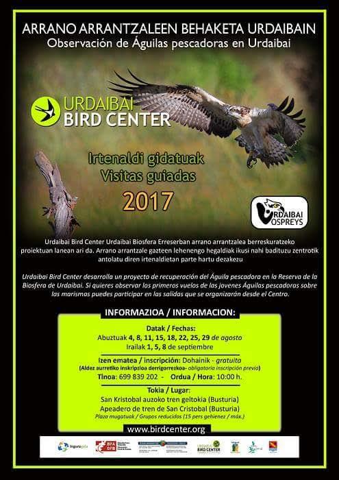 Visita guiada para ver águila pescadora, con Urdaibai Bird Center