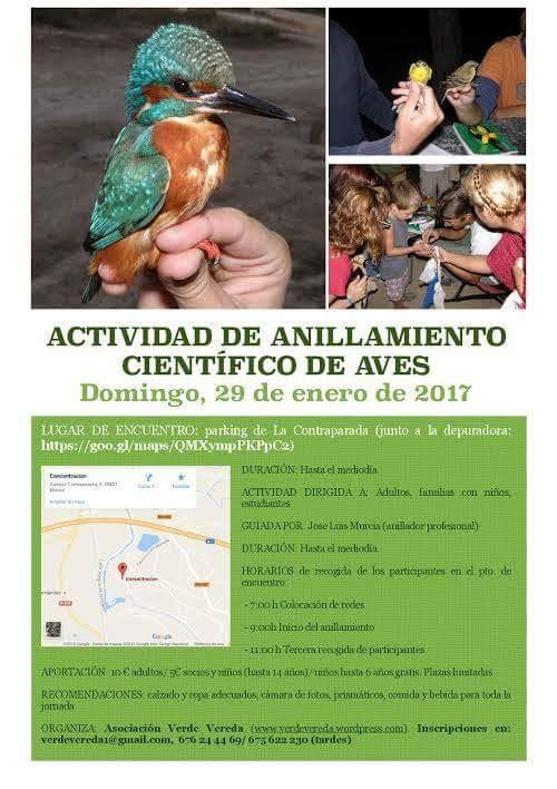 Anillamiento científico de aves, con Verde Vereda