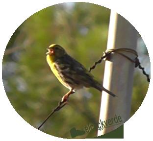 Jornada para conocer más a las aves
