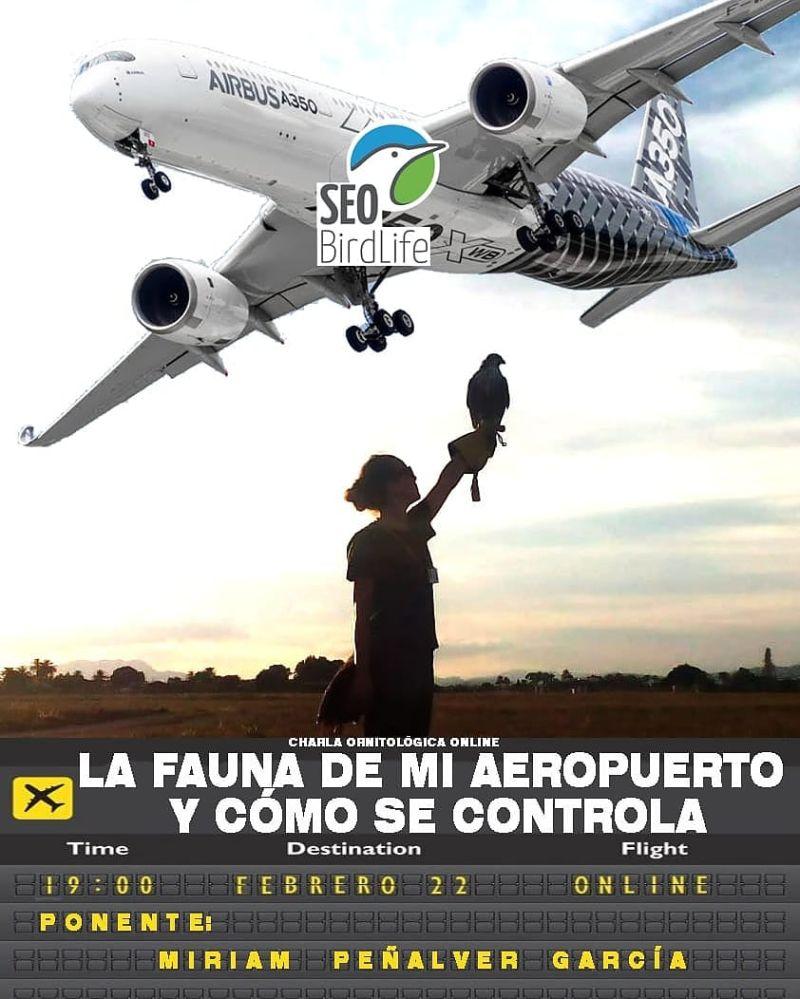 Webinar sobre control de fauna con halcones en aeropuertos, con SEO BirdLife