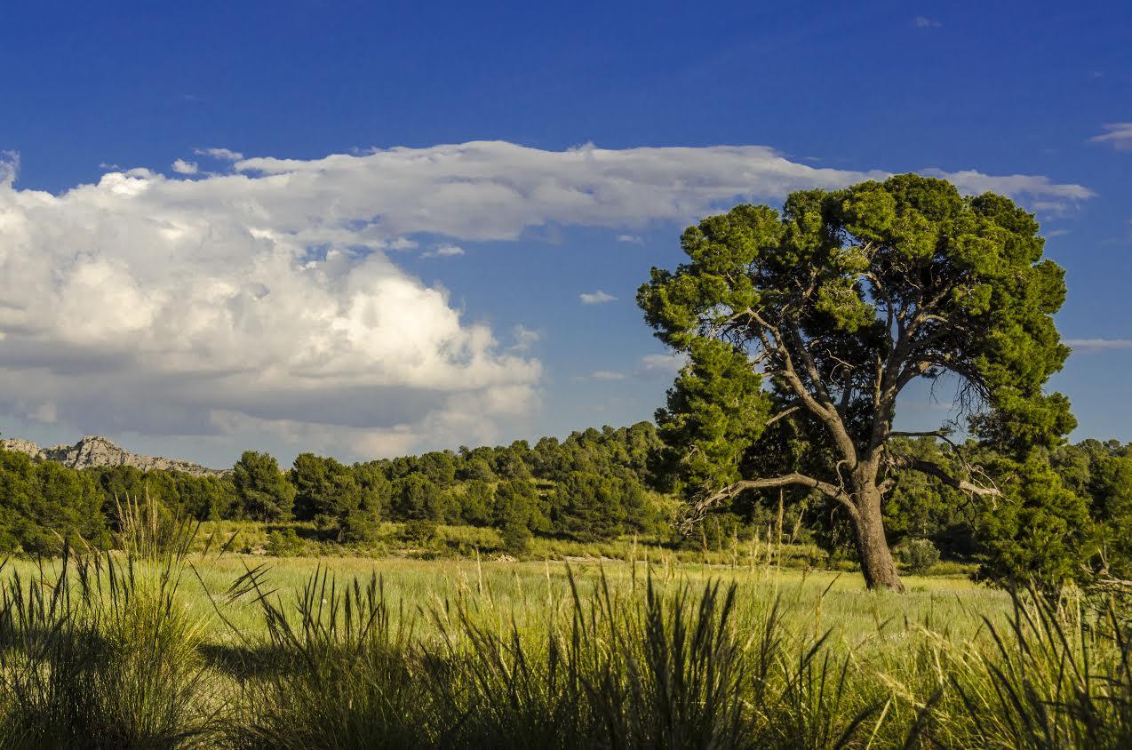 Uno de los paisajes que se verán en la ruta. Imagen: Stipa