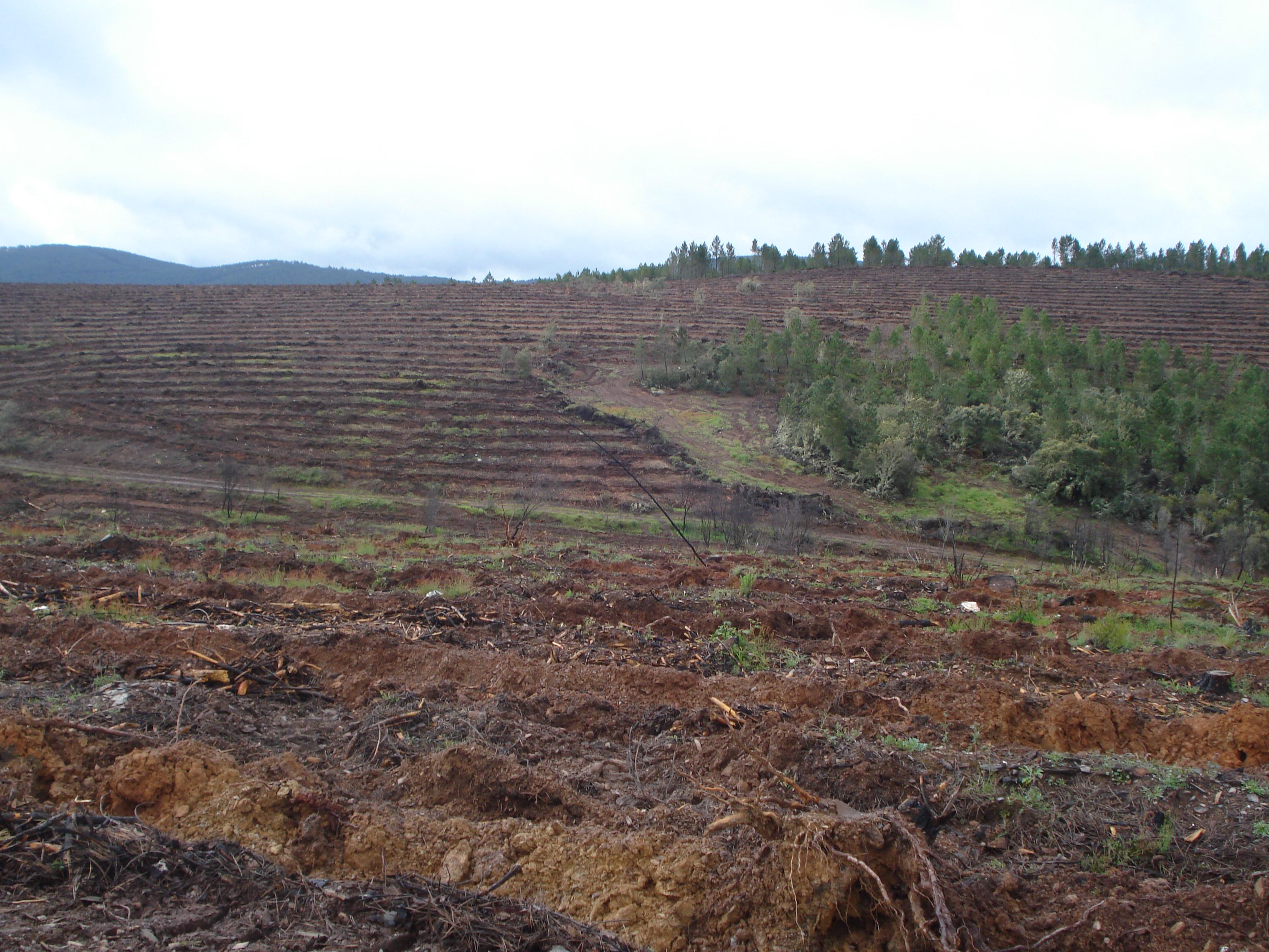 Fajas practicadas en el terreno afectado por el incendio de Orense. Imagen: Mapama