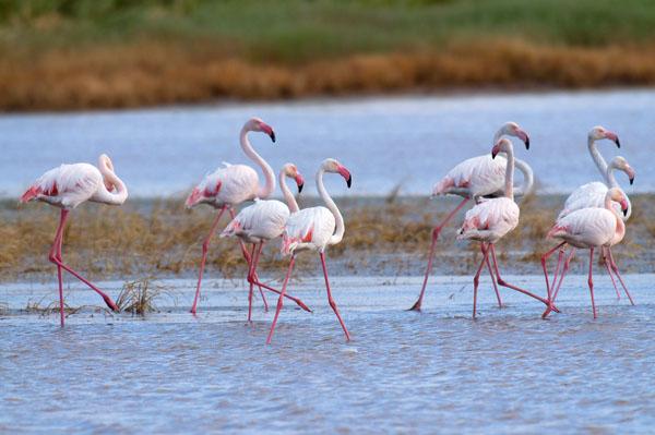 Flamencos rosas. © Jorge Sierra/WWF