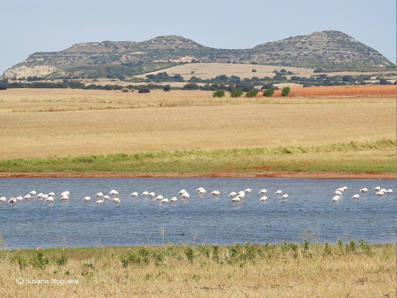 Una panorámica del ecosistema. Imagen: Susana Noguera