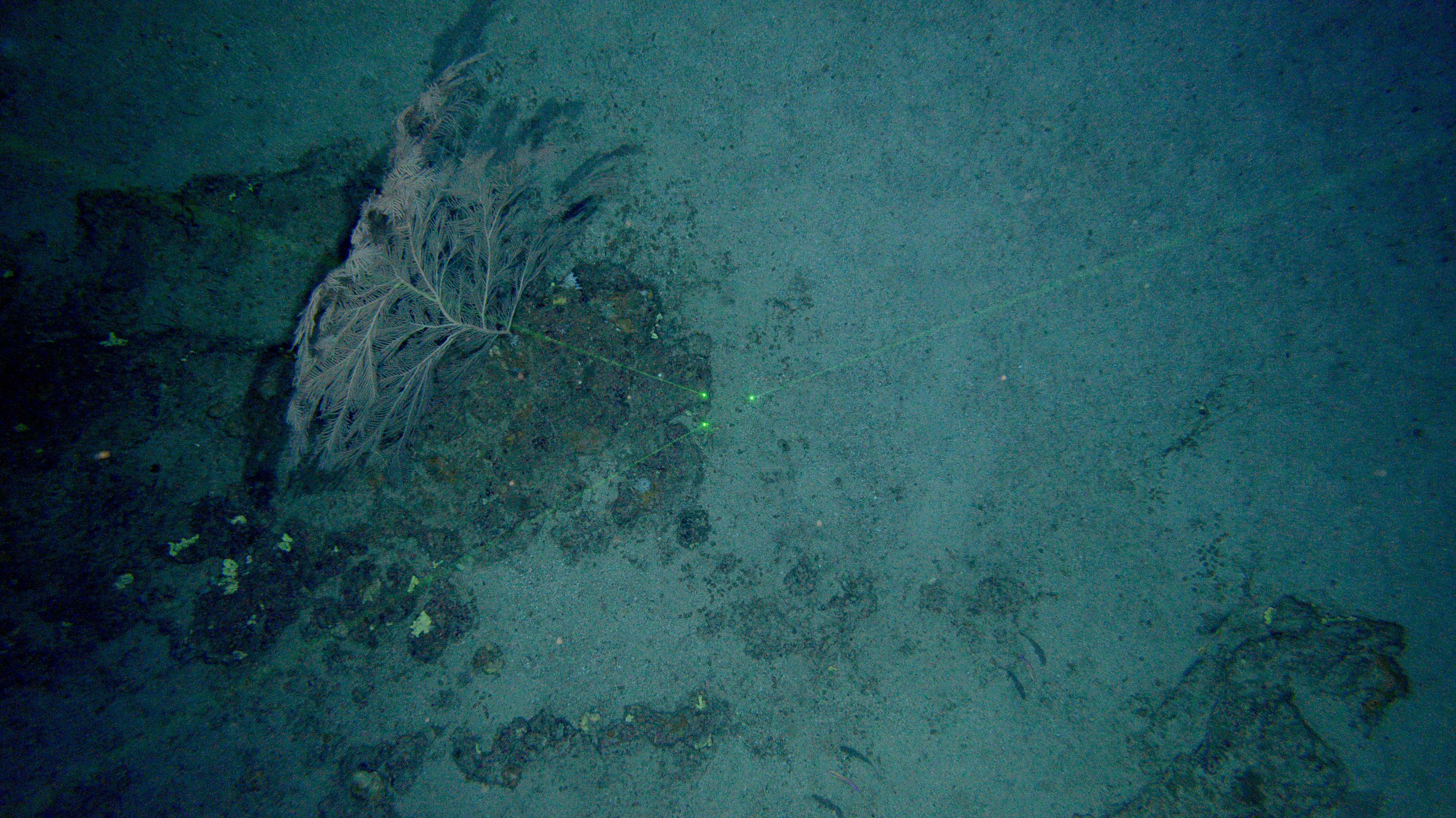 Aspecto del fondo marino. Imagen: IEO.