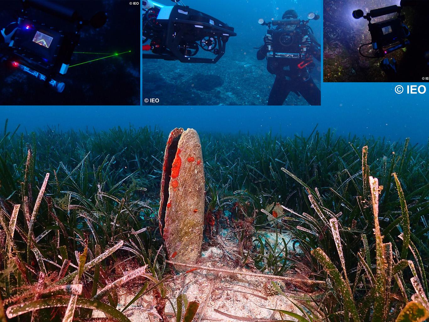 Una nacra en los fondos marinos de Cabrera y momentos de la filmación en el marco del VirtualMAR. Imagen: IEO