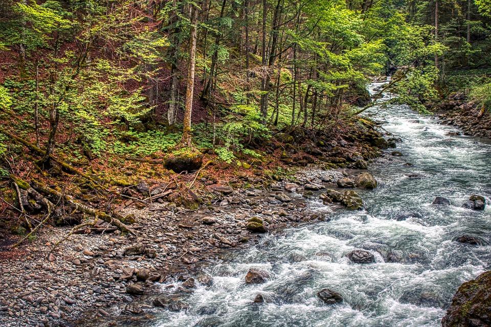 Bosque de Baviera, en el sureste alemán. Imagen: Pixabay