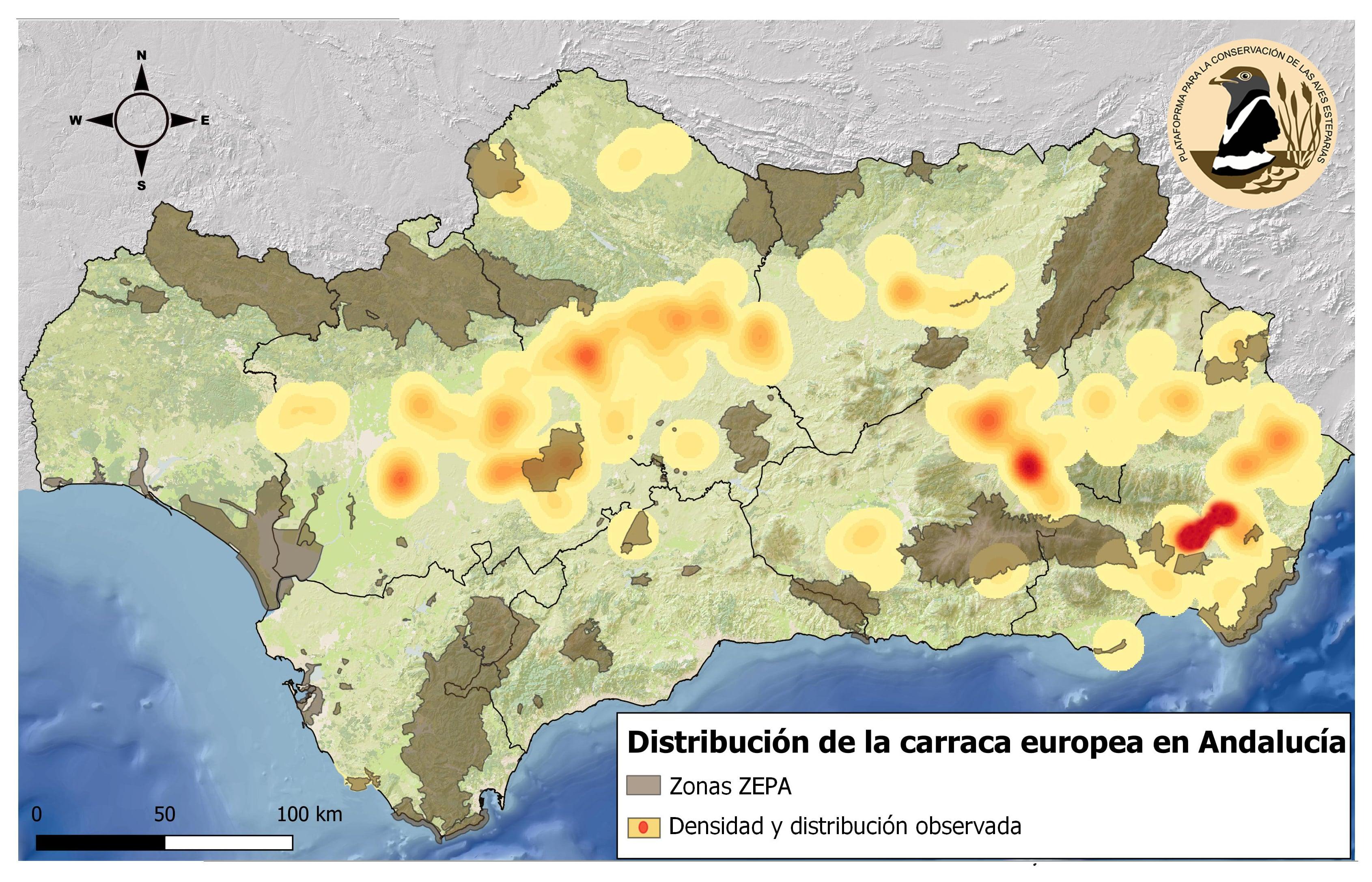 Mapa de distribución y densidad de carraca europea en Andalucía obtenido en el sondeo. Imagen: Pcaeh