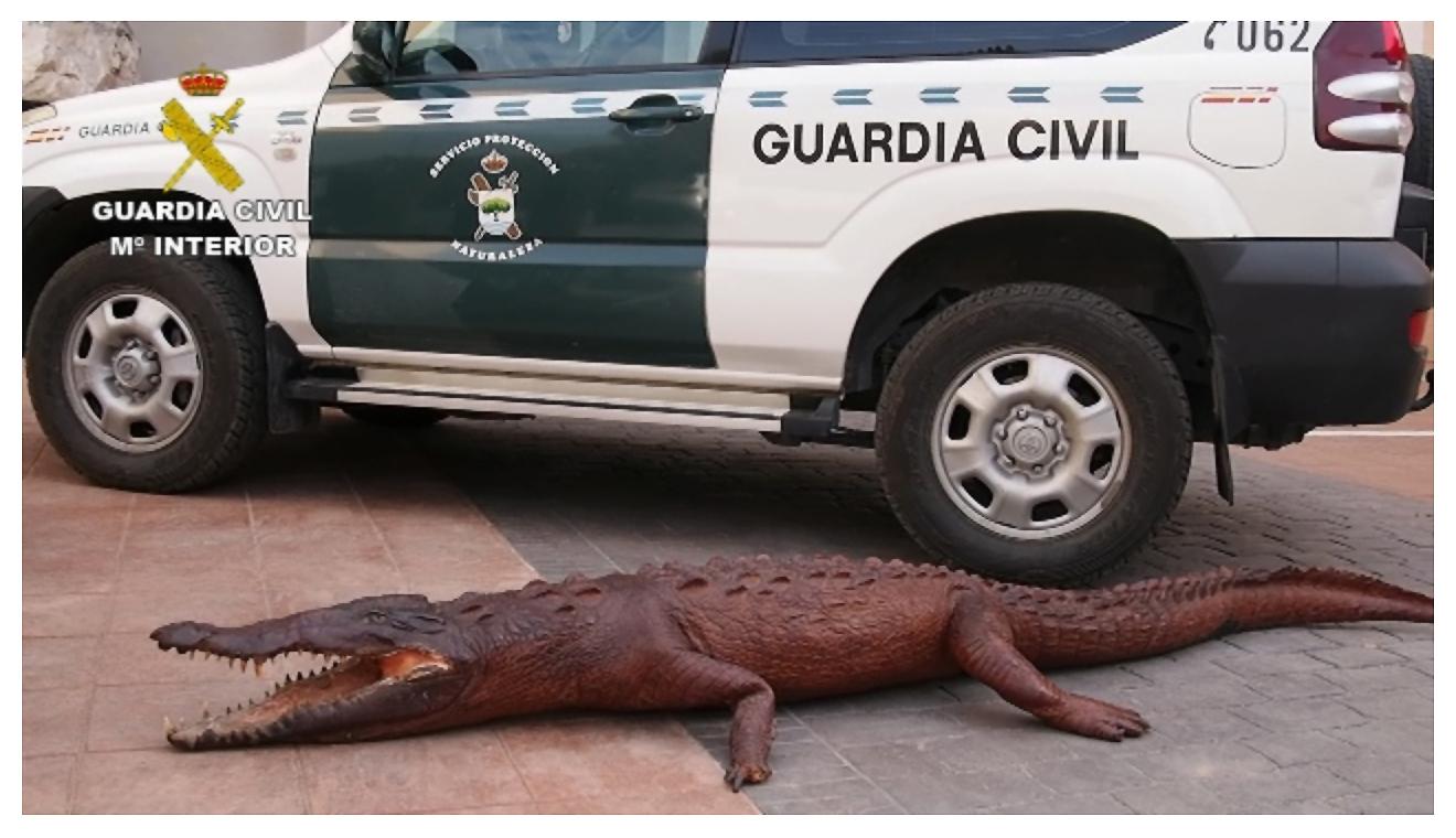 Fotografía de archivo de una operación contra el tráfico de especies realizada el año pasado. Imagen: Seprona