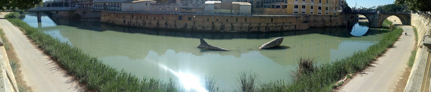 Las aguas del Segura, hoy, con un color verde y  alta turbidez. Imagen: Huermur