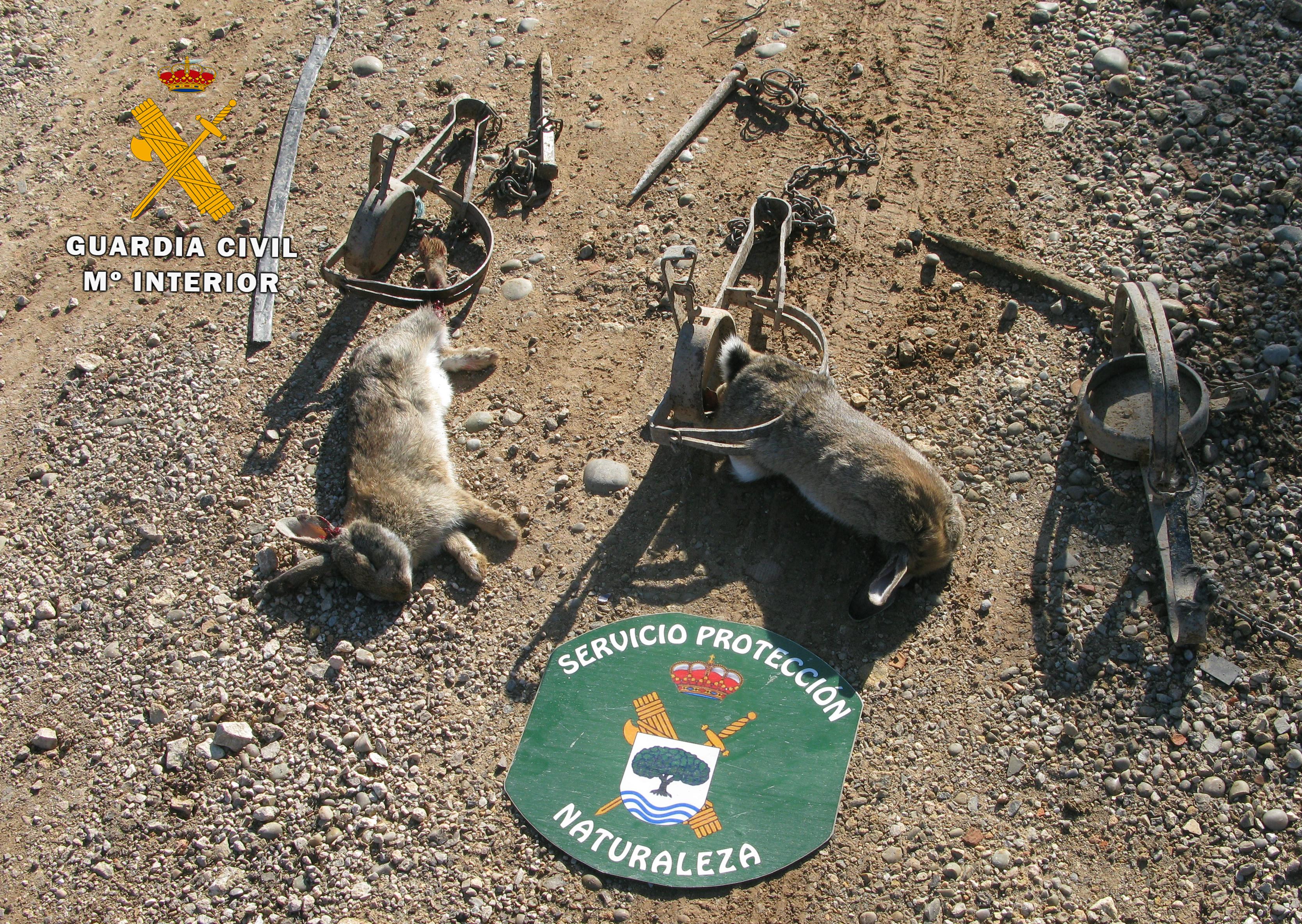 Conejos capturados con trampas no selectivas. Imagen: Guardia Civil de Hellín