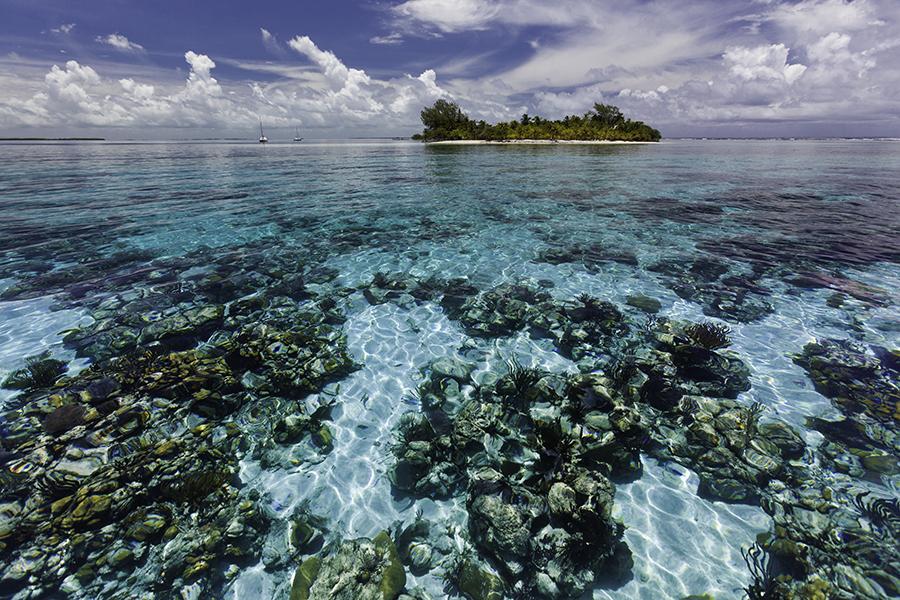 Gran Barrera de Coral de Belice. Imagen: WWF