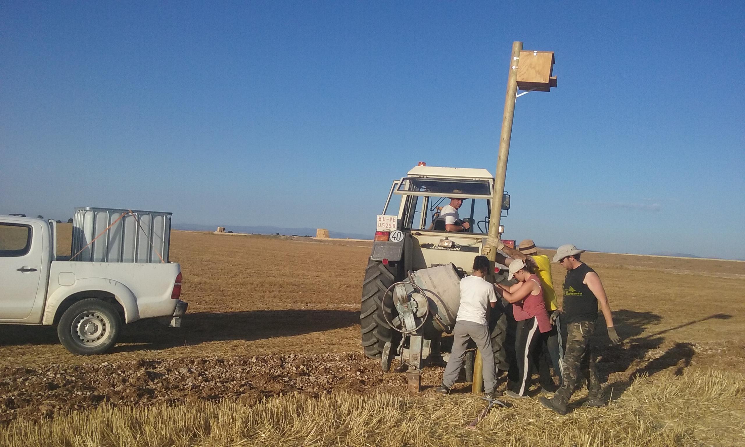 Vecinos de Villafruela (Burgos) y voluntarios instalan una caja nido para rapaces depredadoras de topillo. Imagen: Grefa