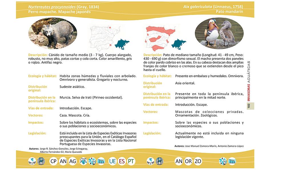 Una página con dos EEI del libro '¡Cuidado, invasoras acuáticas! Guía de las especies exóticas e invasoras de los ríos, lagos y estuarios de la península Ibérica'. Imagen: Life Invasaqua