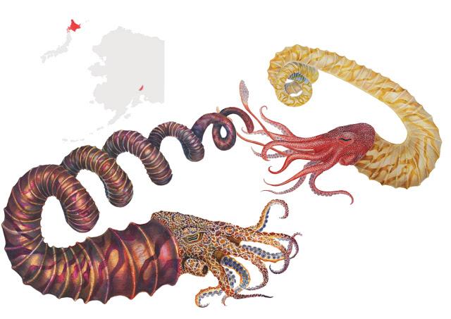 Heteromorphic Ammonoids of the Matanuska Formation, Turonian, Alaska, de Kate LoMedico Marriott, mención especial en la categoría de ilustración científica. Imagen: MNCN