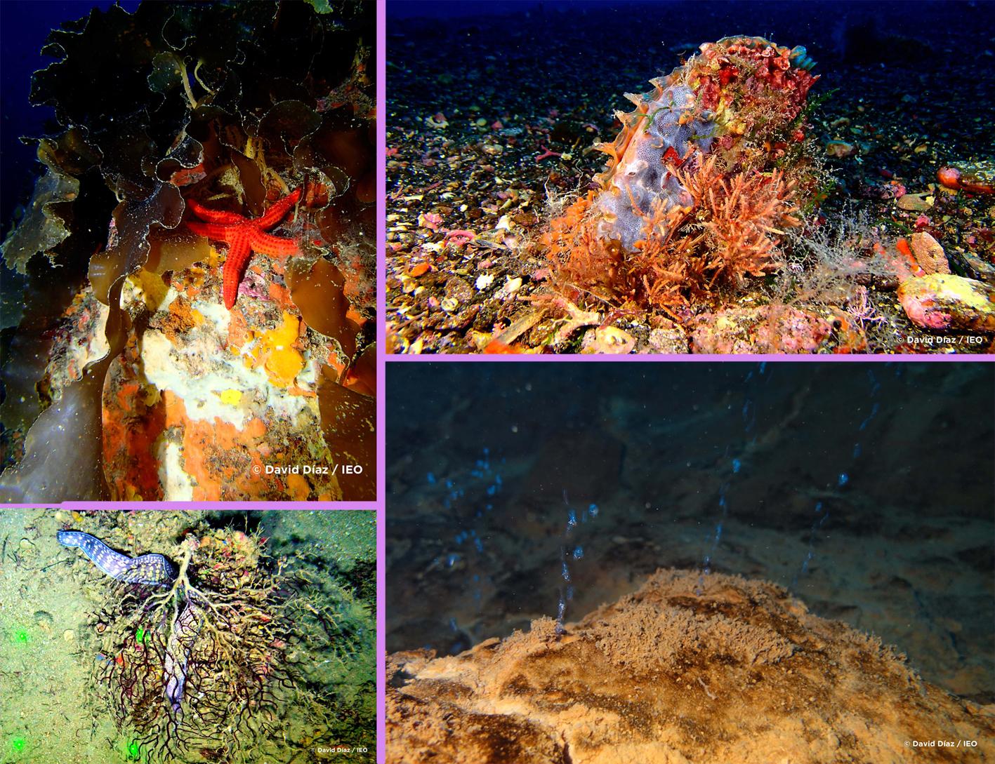 Varios detalles de los fondos submarinos estudiados. Imágenes: IEO / sus autores