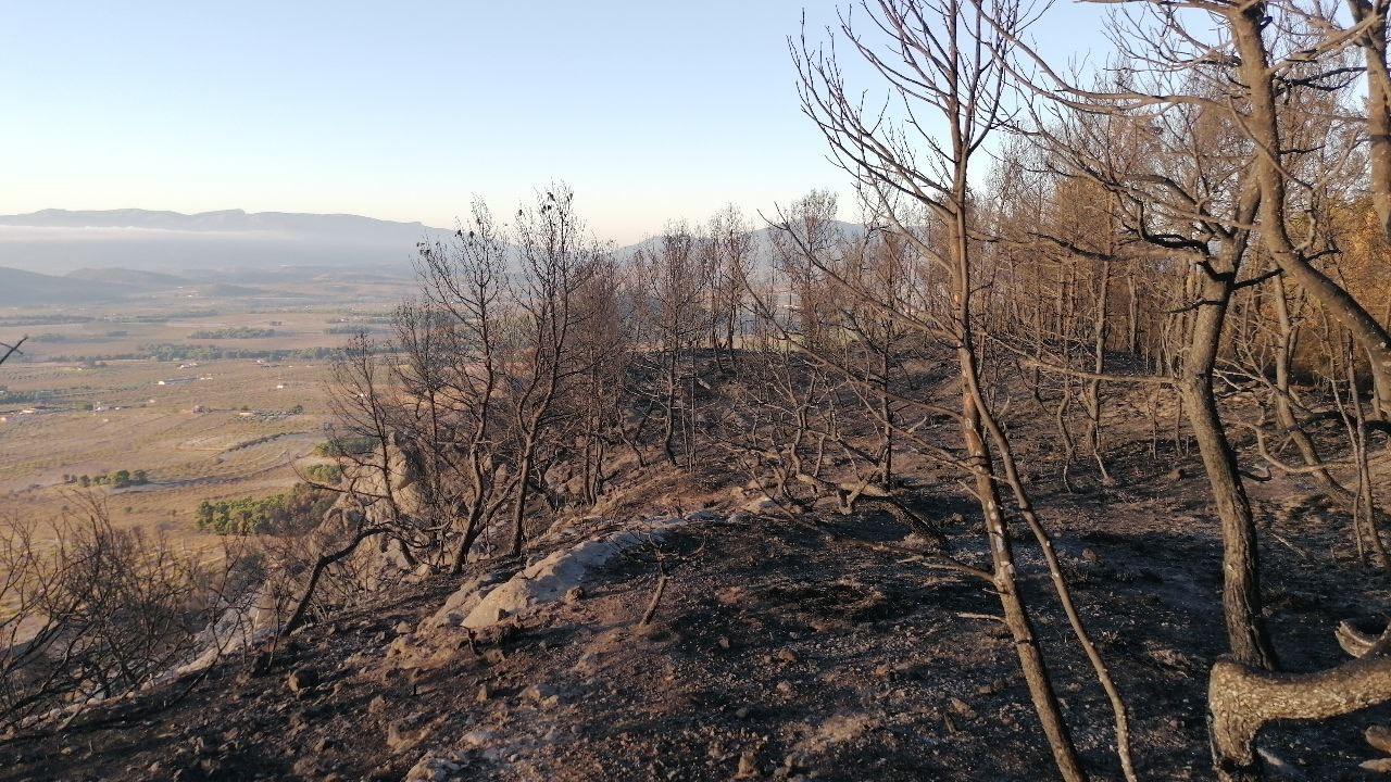 Aspecto de la zona del incendio tomadas esta mañana por agente medioambiental de la Dirección General del Medio Natural. Imágenes: 112