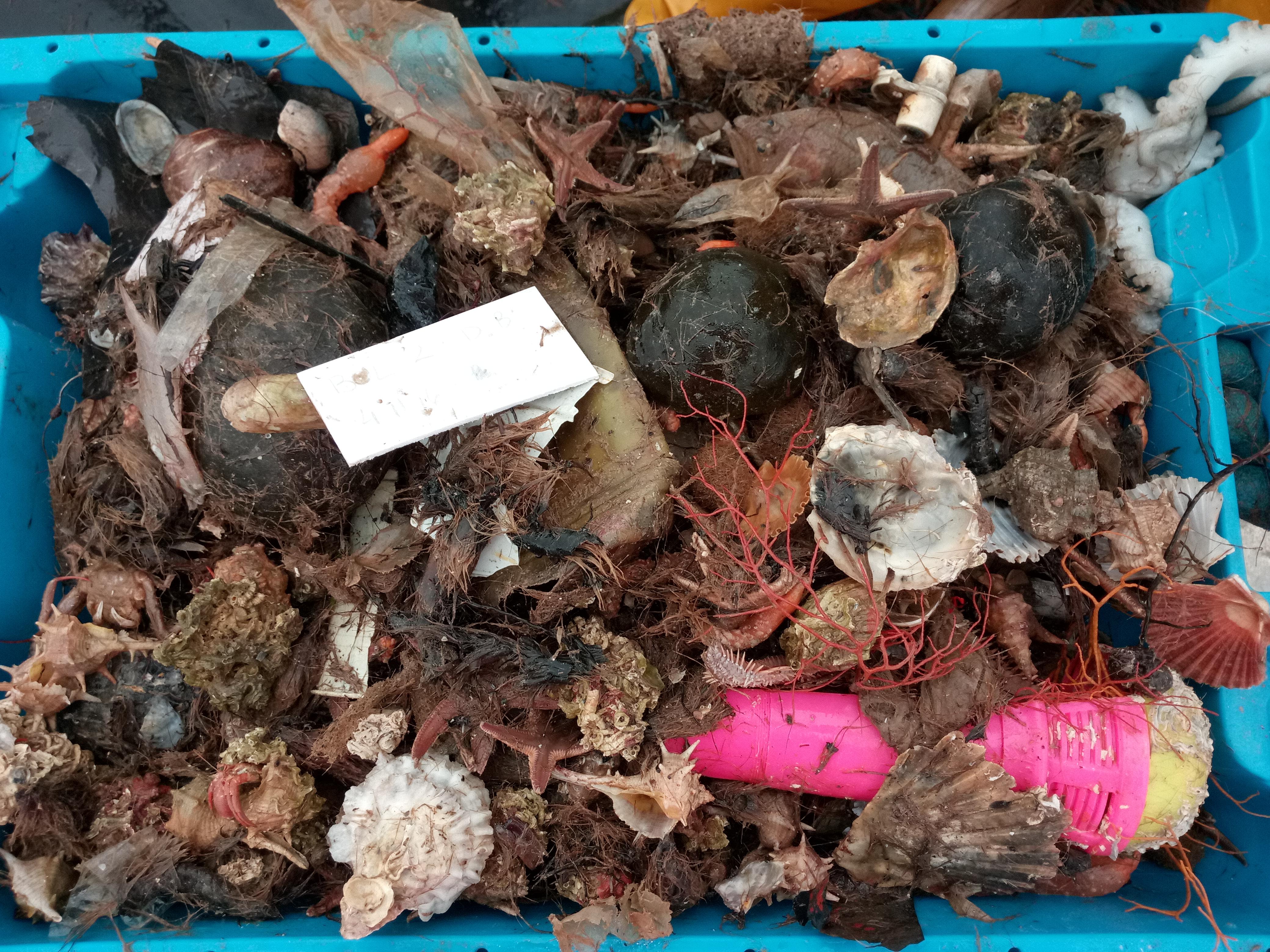 Una de las cajas repletas de basura recogidas durante el estudio. Imagen: Eve Galimany / ICM-CSIC