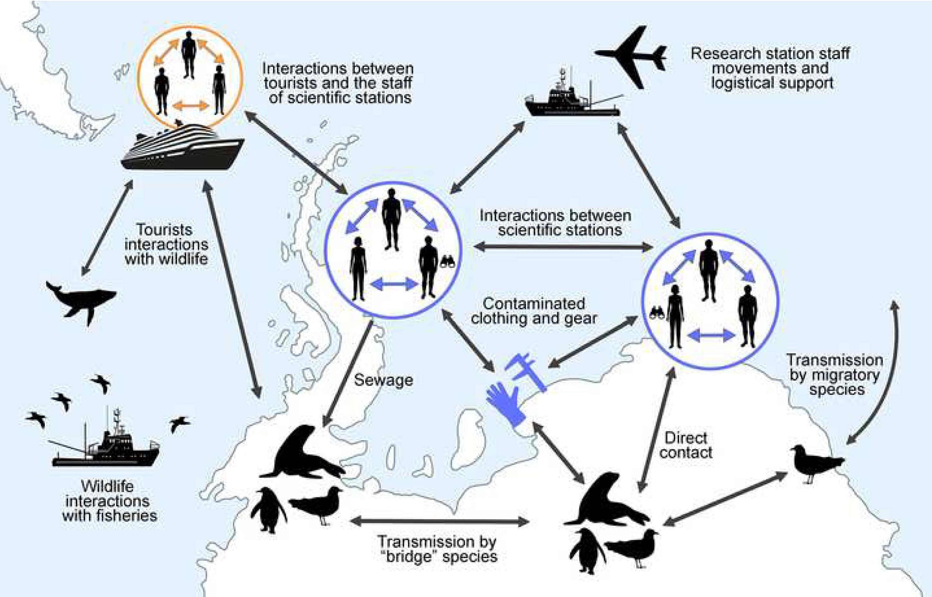 Infografía de la posible transmisión y expansión del Covid-19 en la Antártida. Imagen: Julia I. Díaz / MNCN