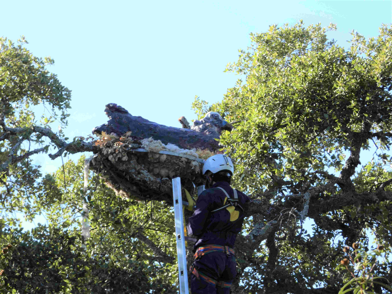 Instalación de una plataforma para la nidificación del buitre negro en el Campo de Montiel. Imagen: José Guzmán / FIRE