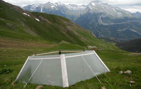 Los investigadores han simulado con invernaderos los efectos del calentamiento climático sobre esta especie. Imagen: Jesús Villellas / MNCN_CSIC
