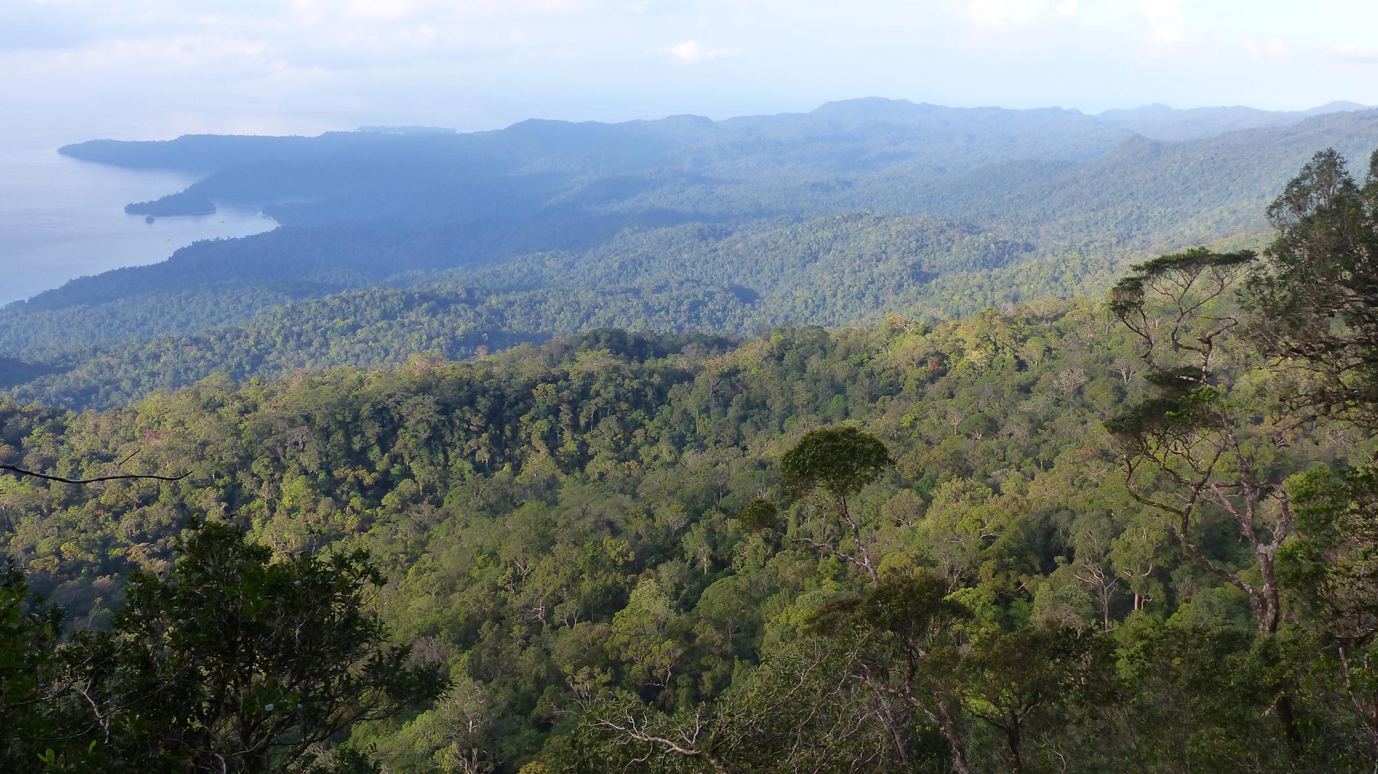 Vista de las montañas Kumawa desde el campamento situado a 1100 m. Imagen: Christophe Thébaud / MNCN-CSIC