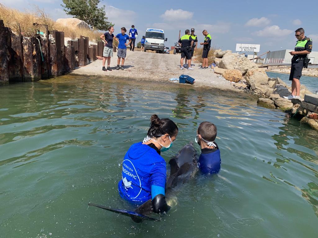 La doctora Consuelo Rubio-Guerri, en primer plano, atiende un delfín varado en Valencia. Imagen: Fundación Oceanogràfic