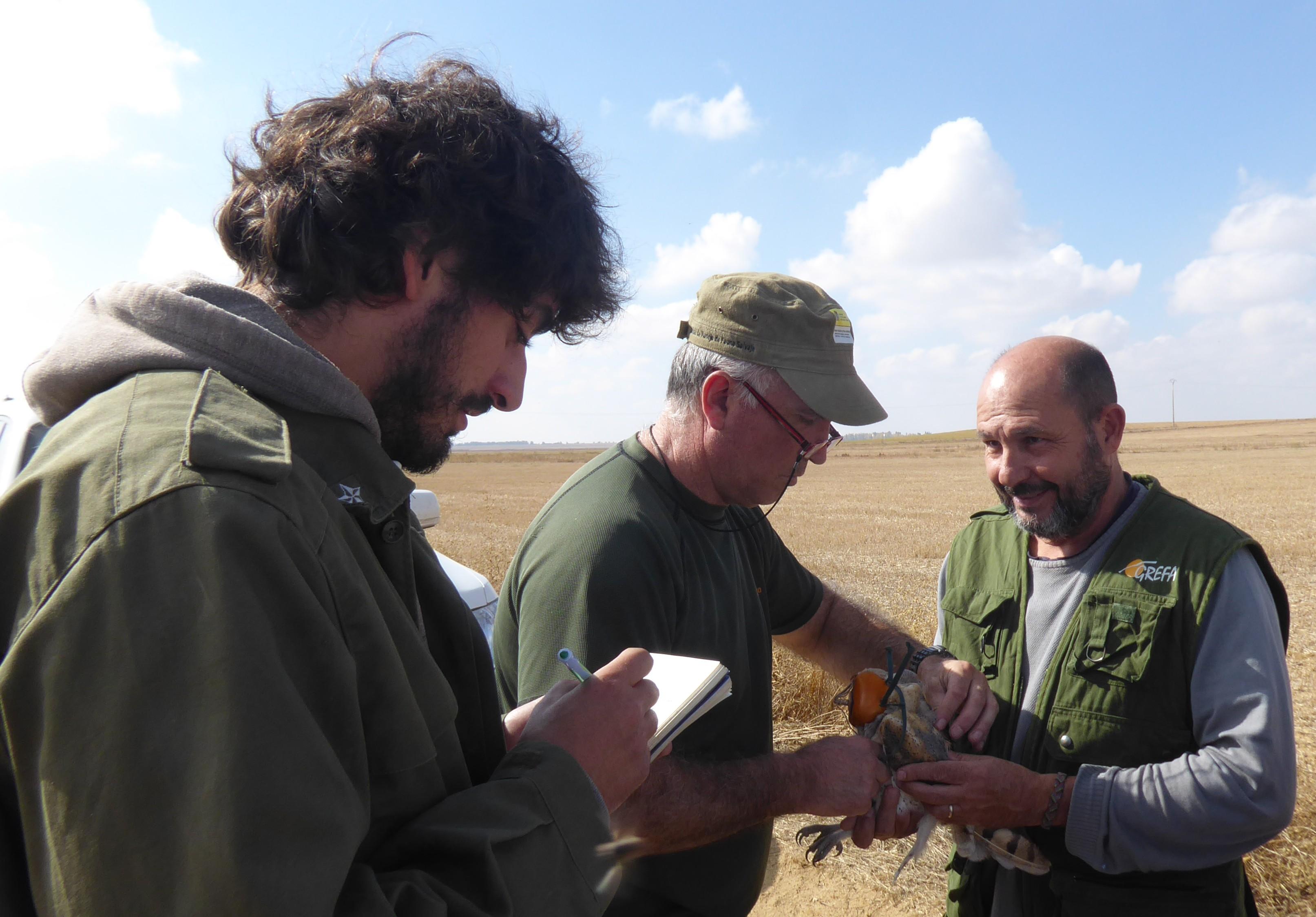 Un especialista coloca un emisor GPS a una lechuza en Castilla y León. Imagen: Grefa