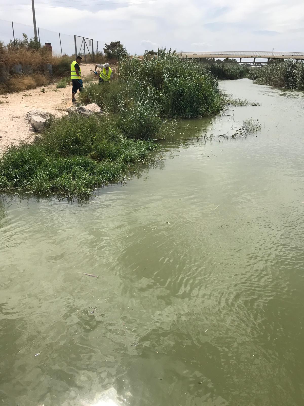 El organismo de cuenca ha finalizado la limpieza de la barrera de flotantes en la desembocadura de Guardamar. Imagen: CHS