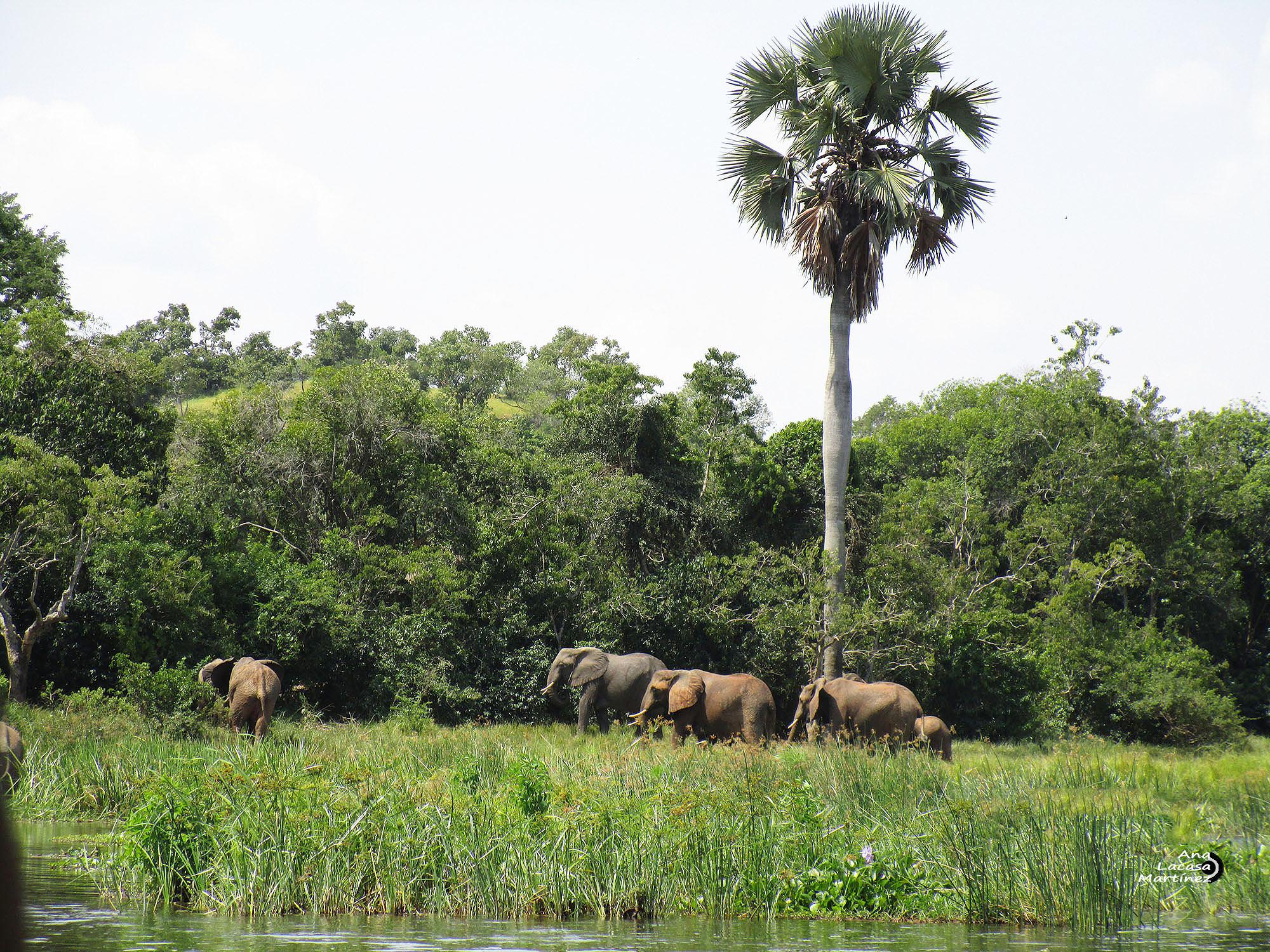 Una manada de elefantes se cruzó a lo lejos