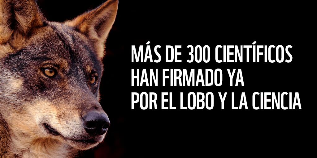 Respaldo de la comunidad científica al manifiesto por el lobo de WWF. Imagen: WWF