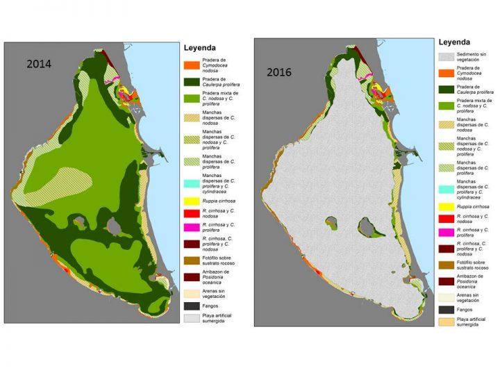 Vegetación del mar Menor. Imagen: ANSE