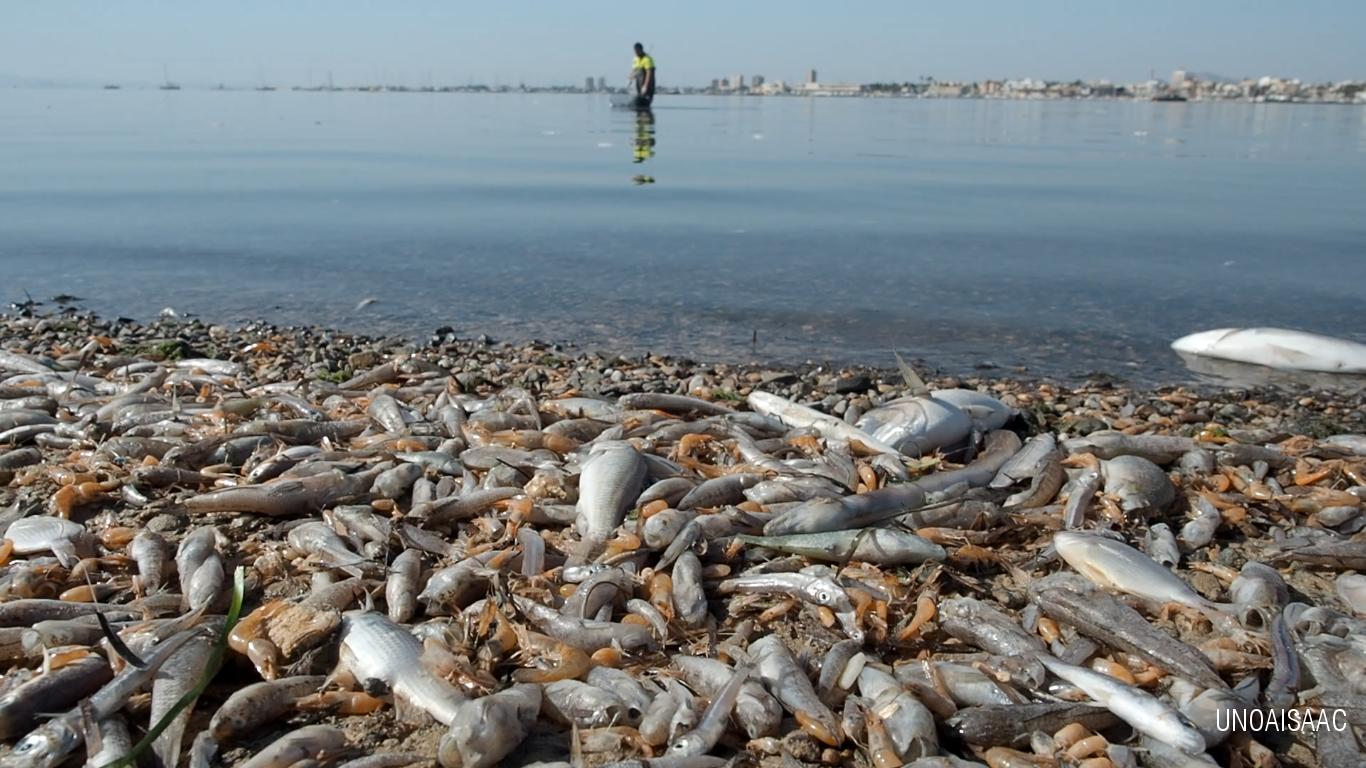 Peces Muertos en el Mar Menor, el 13 de octubre de 2019. Imagen: Uno Aisaac / Ecologistas en Acción