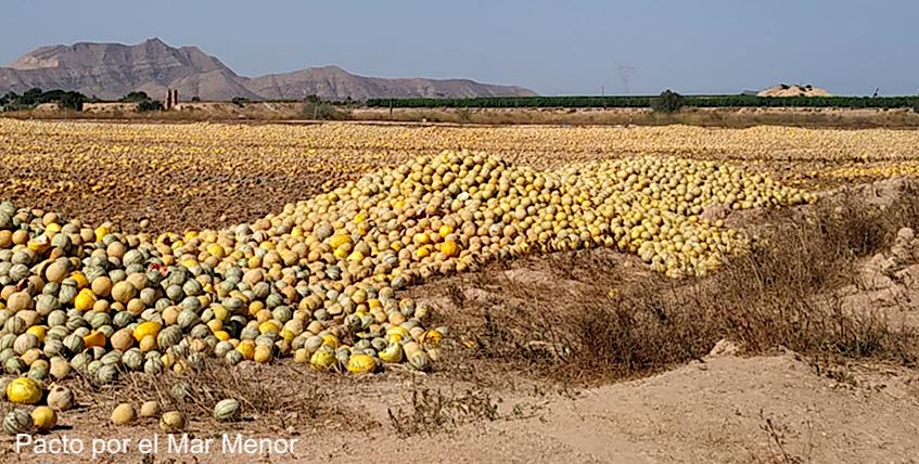 Melones abandonados en el Campo de Cartagena. 22 de julio de 2019. Imagen: Pacto por el Mar Menor