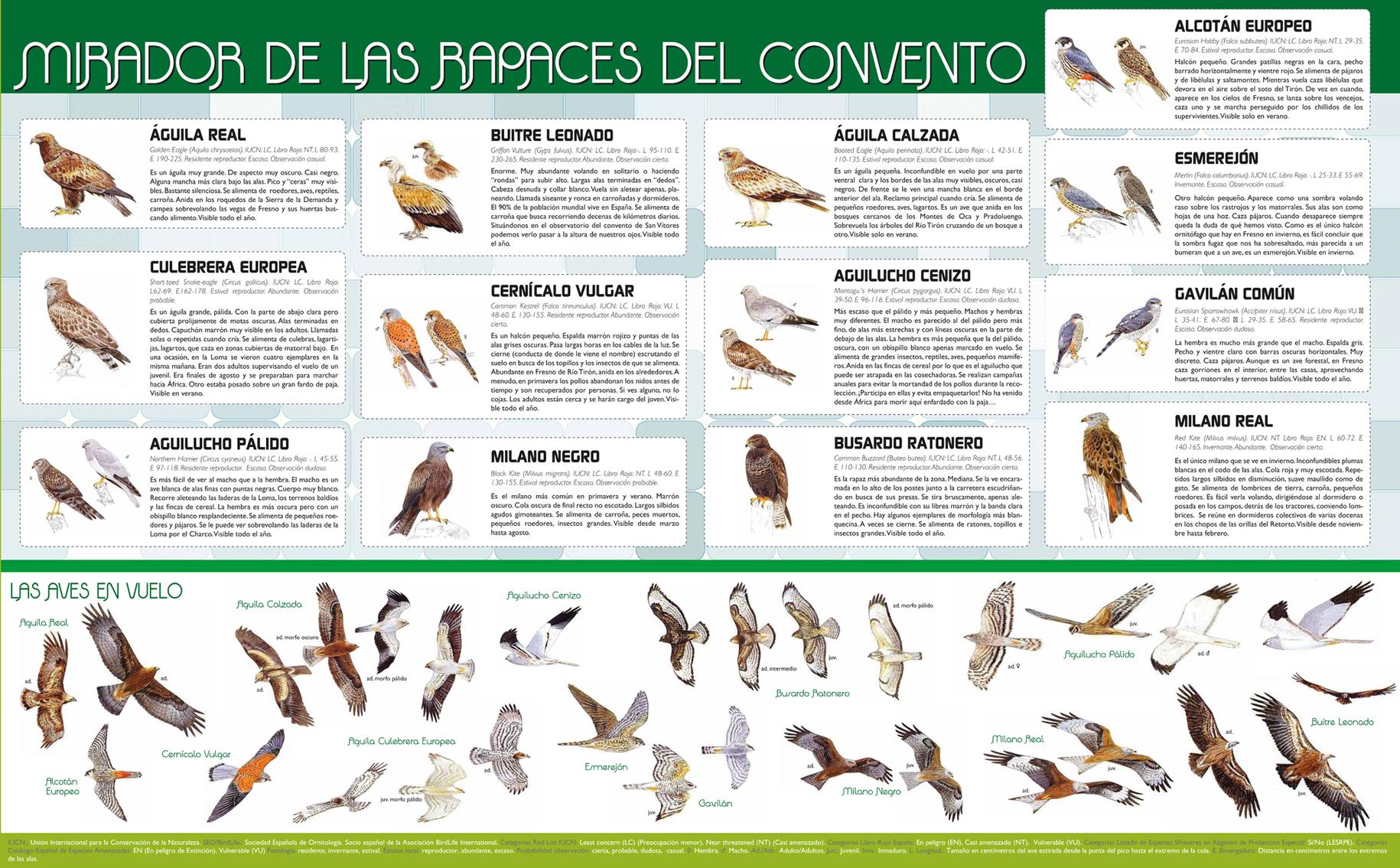 Pequeña guía de aves de la zona, ilustrada por Juan Varela Simó