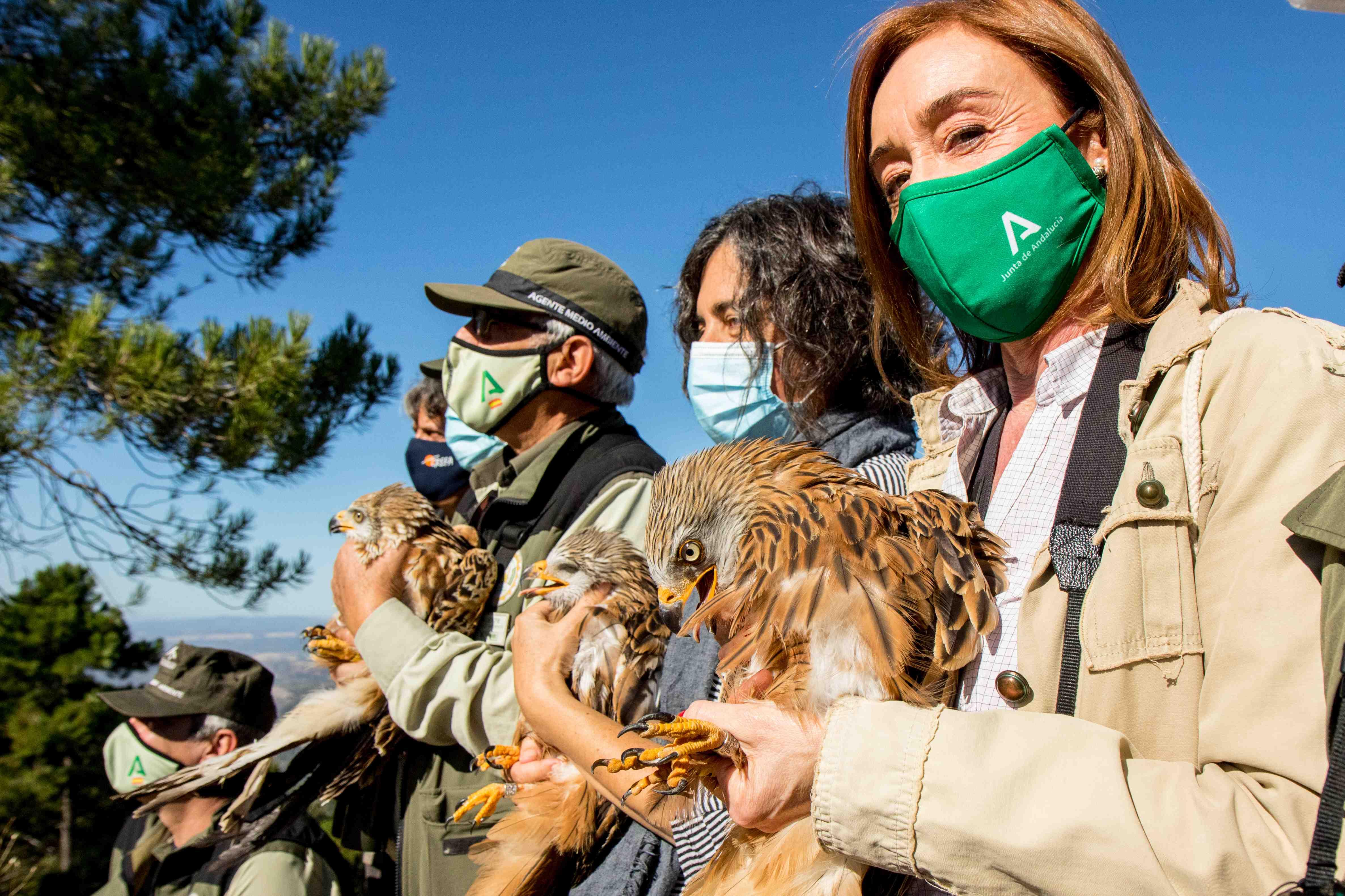En primer plano, Lina Pérez, directora conservadora del Parque Natural de Cazorla, sujeta a un milano real a punto de ser liberado. Imagen: Grefa