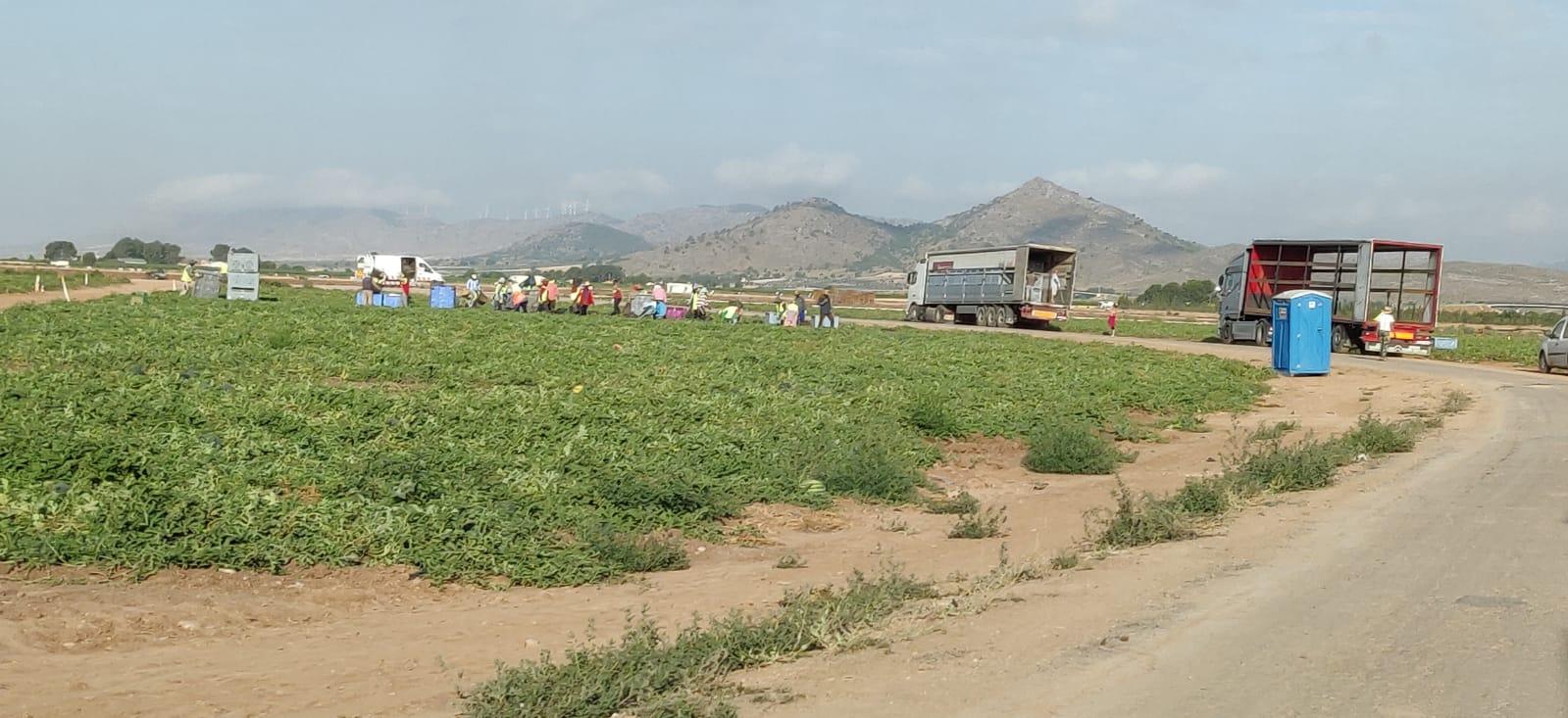 La invasión de residuos de plástico de uso agrícola es otro de los motivos de las quejas vecinales en Yecla. Imagen: Plataforma Ciudadana Salvemos el Arabí y Comarca
