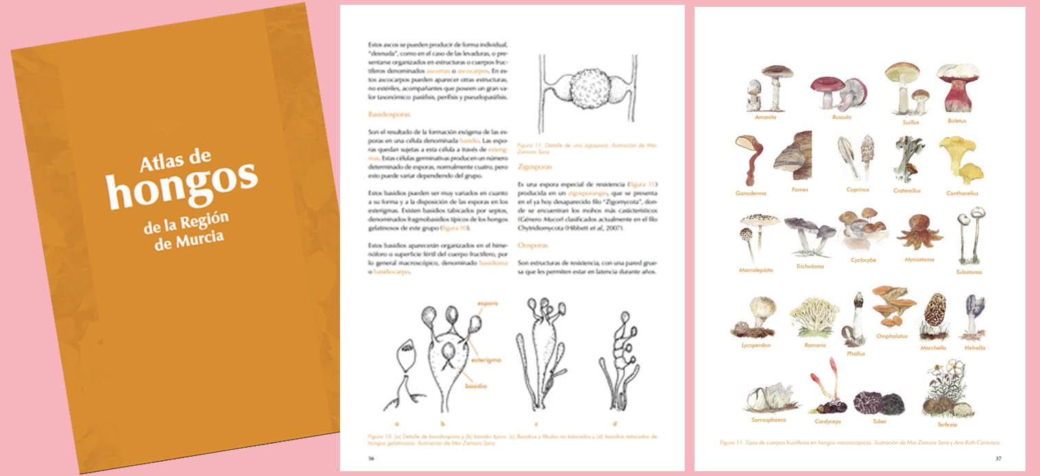 Portada y un par de páginas del 'Atlas de Hongos de la Región de Murcia'. Imagen: CARM