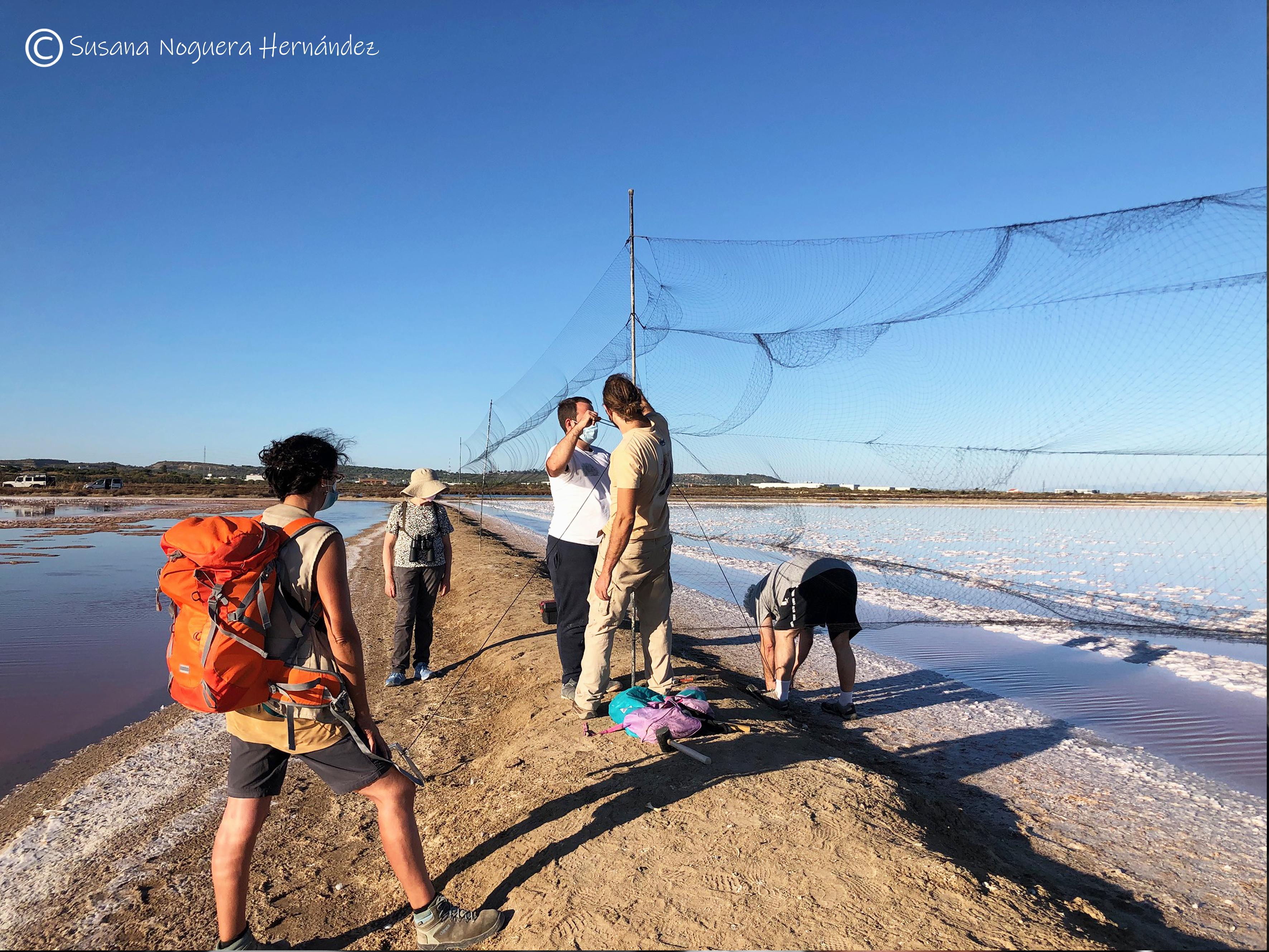 Montando redes para anillamiento en la bahía de Cádiz. Imagen: Susana Noguera