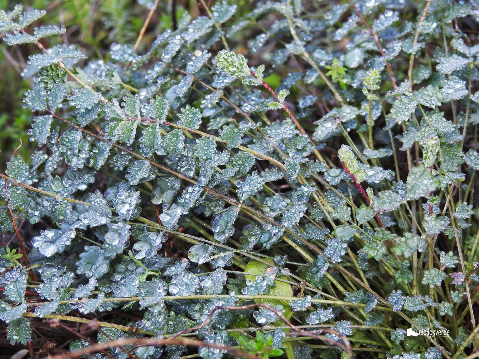 Es magnético mirar las gotas de rocío sobre la vegetación. Imagen: elclickverde