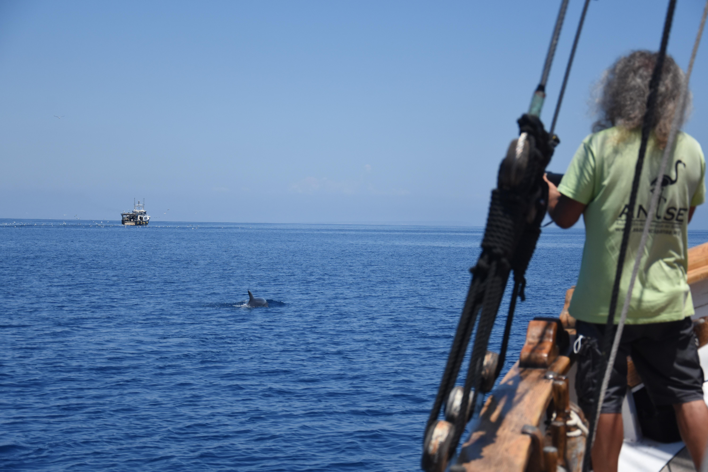 Un delfín mular sigue la estela de un barco de arrastre, visto desde el velero Else. Imagen: A. Morata / ANSE